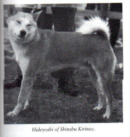 10 Hideyoshi of Shinshu Kirinso