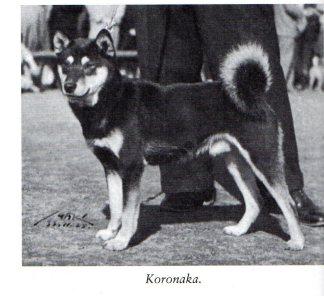 6Koronaka