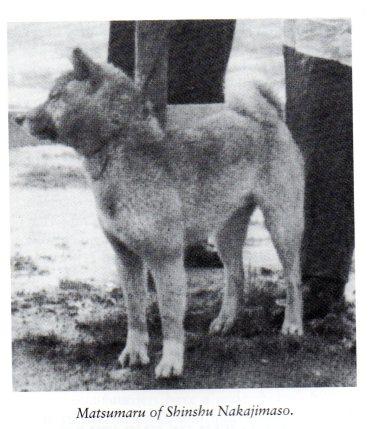 8Matsumaru of Shinshu Nakajimaso